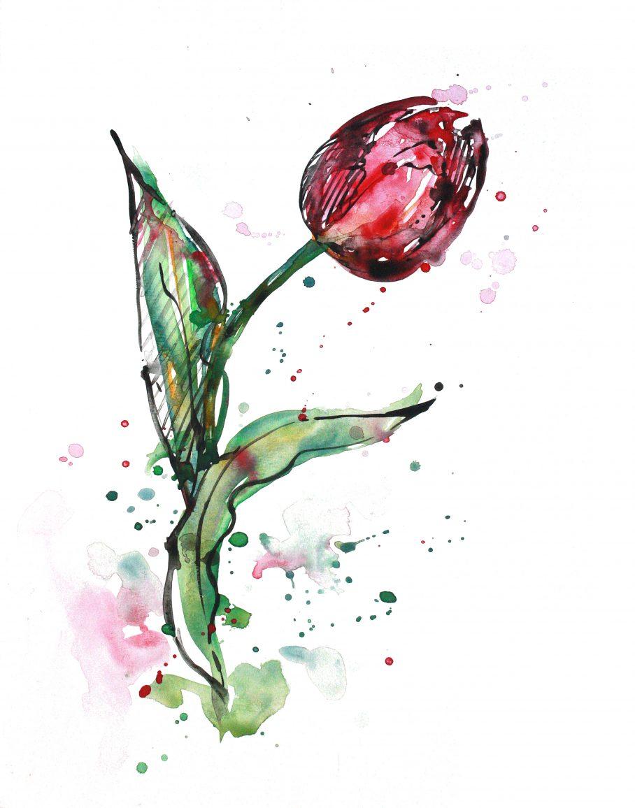 tulip_11x14_